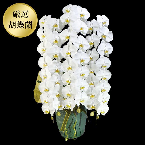 【厳選胡蝶蘭】オレアル 白大輪胡蝶蘭3本立ち45輪
